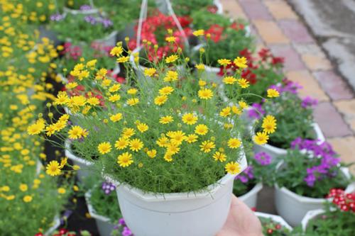 Những loại cây hoa hợp phong thủy