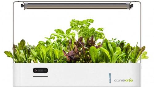 Thiết bị trồng rau sạch tại nhà